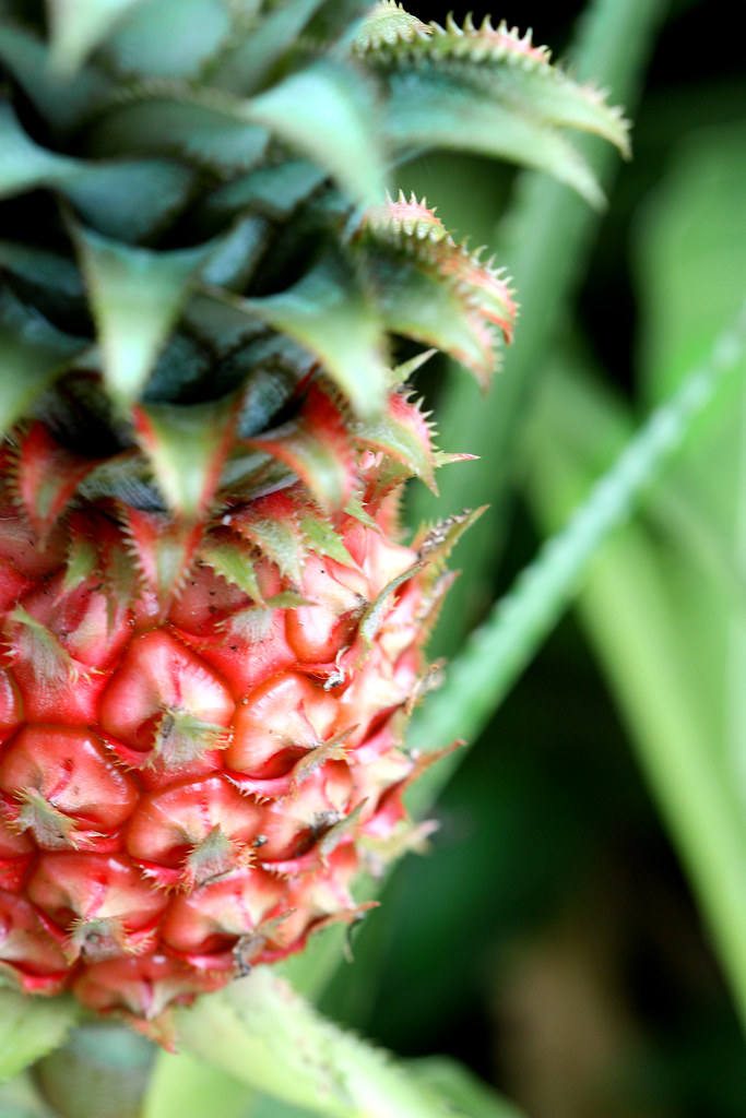 Pineapple: Food As Experience