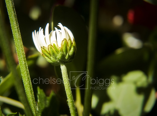 Flower 09_002blog