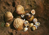 Shells on a Rock (TexasEagle) Tags: shells texture pfosilver