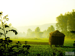 Shriwardhan (Anant Rohankar) Tags: morning india green farm maharastra konkan  shriwardhan