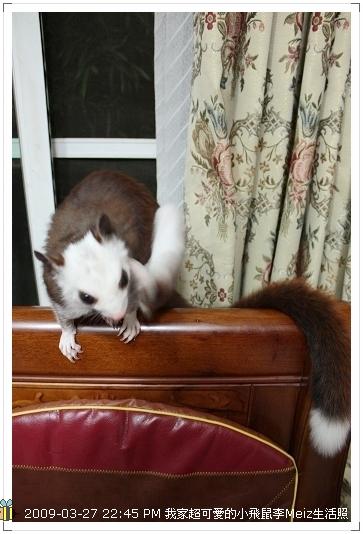 09年二三月小飛鼠Meiz生活照 (43)