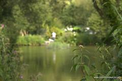 Fishing and Flowers Cofton (coftoncountry) Tags: holiday fishing agency koi rod carp campsite licence angling googlecom yahoocom coursefishing enviromant coftonholidayscouk facbookcoftoncom