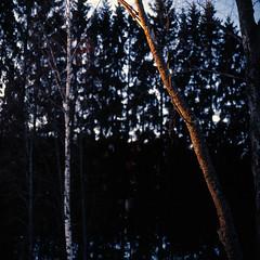 (FriendlyStranger) Tags: 120 6x6 film mediumformat kodak sunsetlight e100vs 120mm kiev88