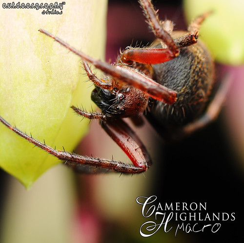 Outdoorgraphy™ : Spidey