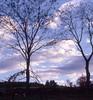 vermont sky (maria hopkins) Tags: trees vermont bluesky siloulette