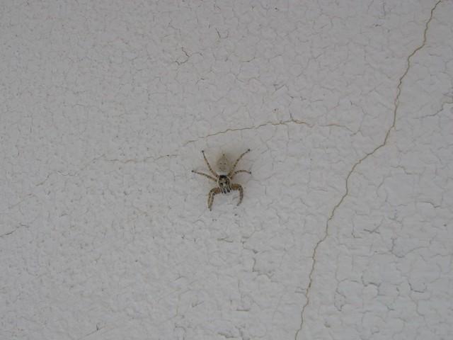 Paint Problem Spider Cracks Ceiling Sand Color
