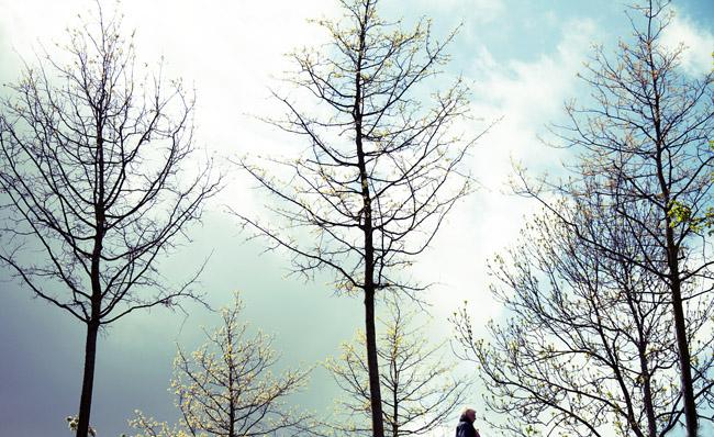 träd på kulle igen