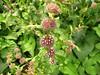 Georgeson Botanical Garden-7