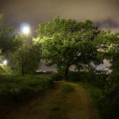The Tree (TB79) Tags: nightshots monteriggioni soe photostitch abigfave platinumphoto colorphotoaward skylandscapes canoneos40d tb79 tommasoburacchi