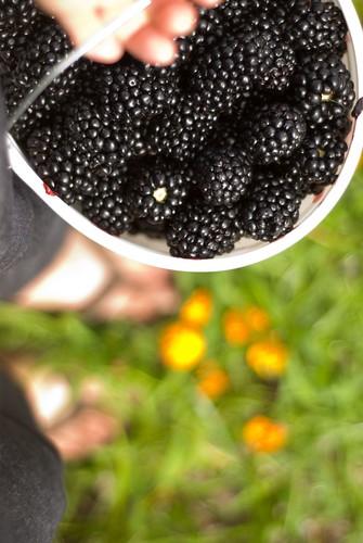 buried in berries