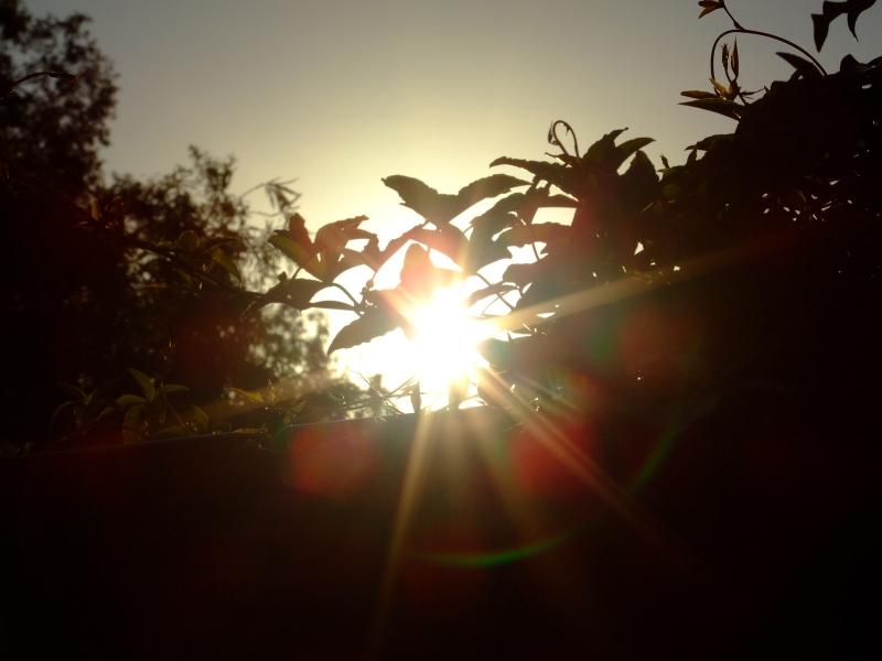 sun pic 04