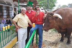 A LOAD OF BULL (TT  FAUGHAN) Tags: irish beer spain stage bull picnik aloadofbull