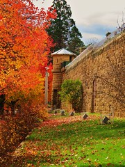 Beechworth Gaol (Sean of the Camera) Tags: autumn building history leaves bright victoria historic alpine jail gaol beechworth porepunkah