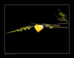 lonely leaf #2 [explored] (e.nhan) Tags: light black art nature leaves yellow closeup landscape leaf colorful colours dof bokeh arts backlighting enhan