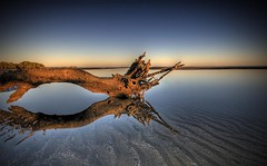~ (Christolakis) Tags: reflection sunrise deadtree hdr nudgeebeach fineartphotos infinestyle amazingamateur thebestwaterscapes favoriteslanscape