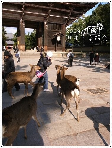 奈良的鹿 (5)