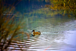 Ripples - Sultanpur Gurgaon