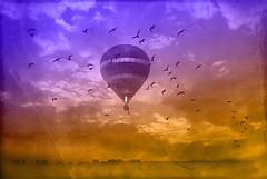 flight (Dan Morgan1) Tags: city sky birds clouds nikon balloon rope textures hotairballoon layers d80 sorrytoboreyouall
