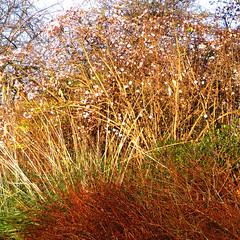 colourful corner (gorgeoux) Tags: park uk london squared regents