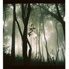 Spring (hanoijazz) Tags: tree 120 6x6 film forest kodak newyear vietnam medium tet hanoi lunar yashica 2009 160 yashicaflex analouge hanoijazz
