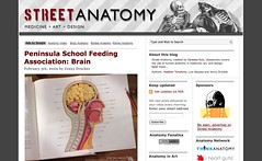 Street Anatomy_1233866829301
