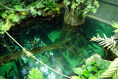 View of the Amazon Tank