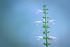 Breathless (kktp_) Tags: 70200mmf28gvr d90 nikon bokeh dof flowers nature
