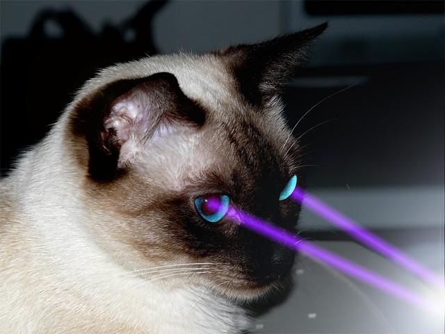 Laser-cat hunting rats