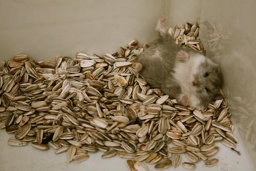 my hamster 2