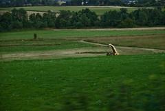 dick shaped agricultural machinery (jordanmatyka) Tags: poland railway dolina pl fromatrain maszyna pociąg kotlinakłodzka kłodzko kłodzka kudowazdrój jordanmatyka jordanm chujowa pocig kotlinakodzka dickshapedagriculturalmachinery
