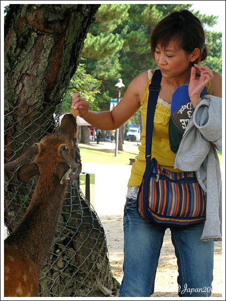 090508_20_奈良公園