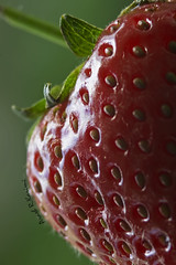 STRAWBERRY MACRO (arash_rk) Tags: strawberrymacro