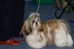 out of ring 2 (Lera/Happy spring!) Tags: dogs spring dogshow 2009 astana