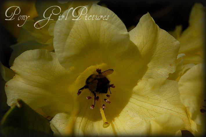 Yellow9