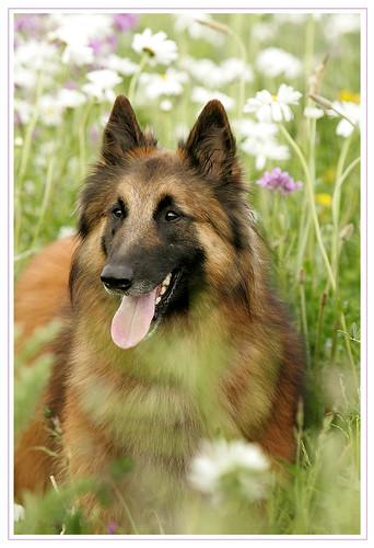 Ringo in der Blumenwiese
