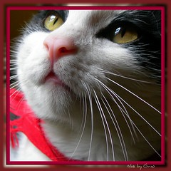 Bocca da baci!!! =o)) (Claudia Gaiotto) Tags: red pet color love smile animal cat eyes funny