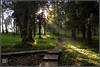 DAWN (Kals Pics) Tags: trees india forest ray kerala adobe wayanad lightroom vythri jungleparkresorts