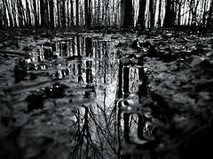 Puddle Of Mud (Shattered Designs) Tags: blackandwhite white black reflection water leaves contrast dark puddle woods mud designs shattered