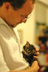 Owen & kitten (hedgiecc) Tags: cat feline chat meetup kittens gato katze   gatito ktzchen chaton davina  gatino flickrfriend owenblacker  petitchat  sookiekitts kittensgalore
