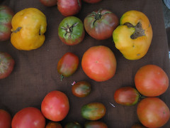Mixed Tomatoes