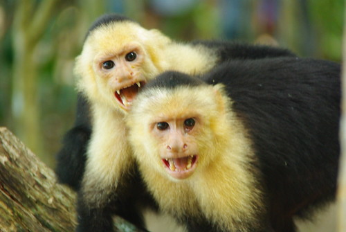3664699076 402f142e81 More Monkeys