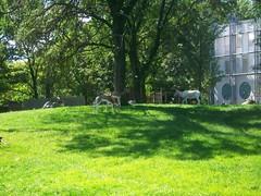 Philadelphia Zoo - (fkalltheway) Tags: philadelphiazoo fkalltheway