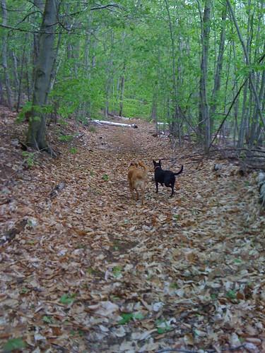 emmy and inga enjoying the forest