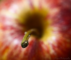 Concentrating (Lohb) Tags: apple fruit canon healthy concentrate concentrating 500d redapple anappleaday