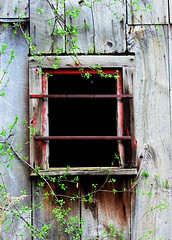 Black Window (a56jewell Slow for the Summer) Tags: old black window canon vines barnboard a56jewell