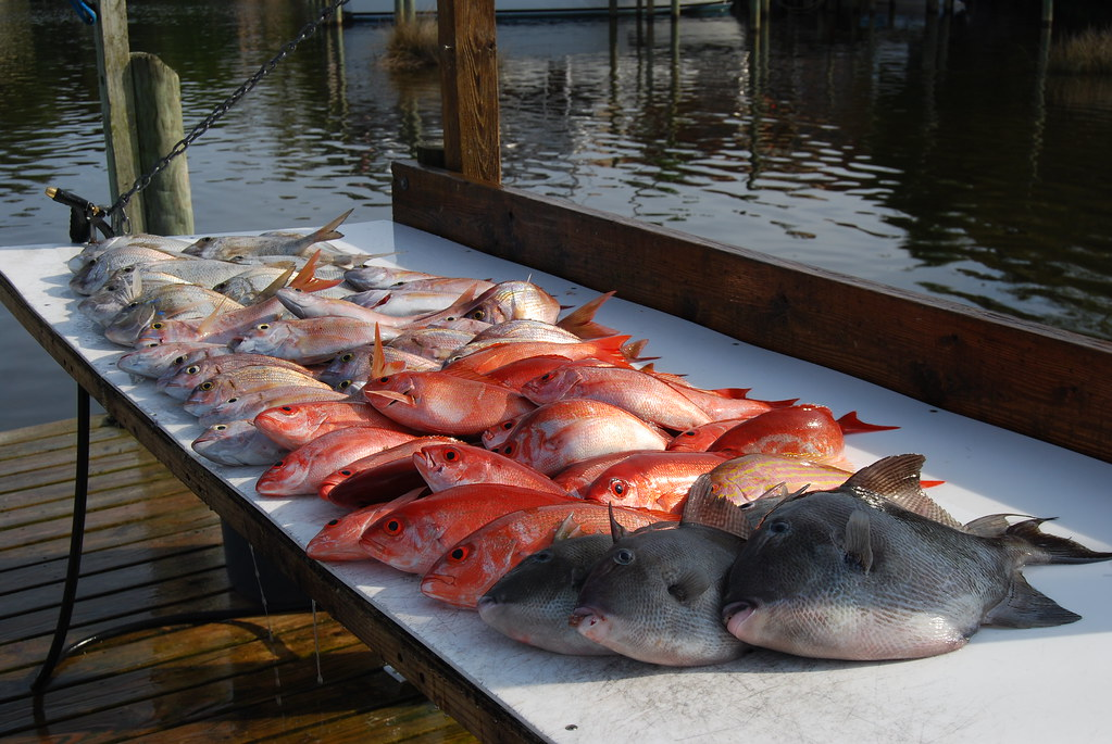 Synonyms of Red Porgy