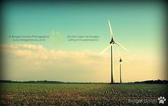 """151/365 """"Windpower"""" (Bridget Davey (www.bridgetdavey.com)) Tags: field germany deutschland energy europe windturbine windpower windkraft greenenergy zeitz saxonyanhalt sachsenanhalt windkraftwerk windturbinefield grueneenergie"""
