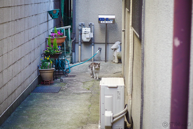Today's Cat@2014-03-10