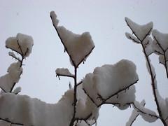 Snow on the tree (Elanorya) Tags: snow tree gelo neve terra albero inverno alto bianco freddo aria rami fiocchi