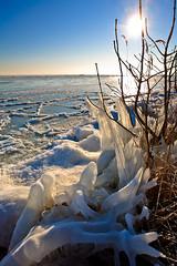 Frozen tree (KennethVerburg.nl) Tags: winter lake tree ice nature netherlands landscape frozen meer bevroren nederland natuur polder landschap noordholland waterland ijs ijmeer canoneos5d uitdam